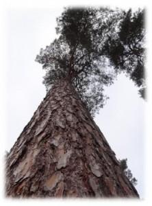 kunst en bomen bomenkunst