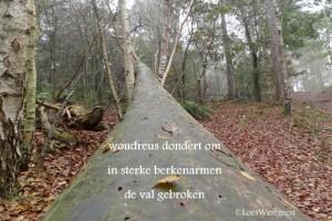 woudreus dondert om bomen bossen loes westgeest 2 10 2014