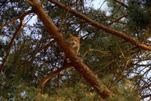 De kat schreeuwt de campinggasten toe, maar komt de boom niet uit (Foto Toby de Kort).
