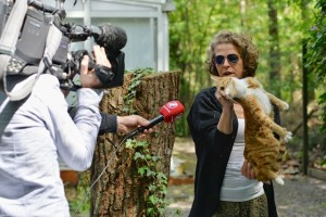 De kat is uit de boom in Oisterwijk (Foto: Toby de Kort)