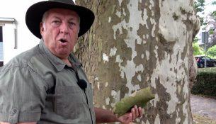 Film: Droogte betekent gevaar voor natuur in Oisterwijk?