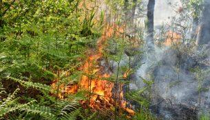 Bosbrand in Oisterwijk ( Foto Toby de Kort)