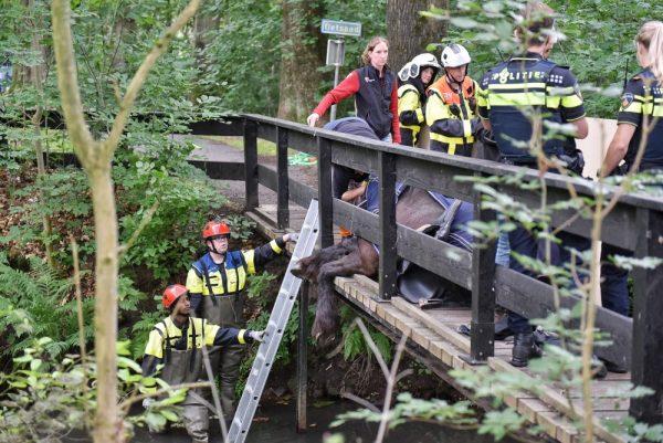 Brandweerlieden redden paard na val (Foto Toby de Kort.